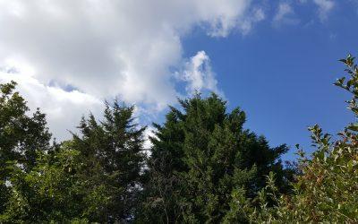 Tree Meets Sky